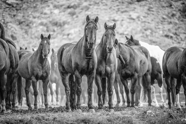Horse Stance Bw Photography Art | Whispering Impressions