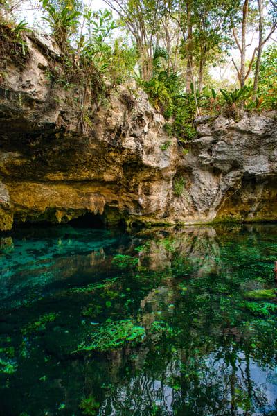 Trees above the Cenote - Art Print - Tamea Photography