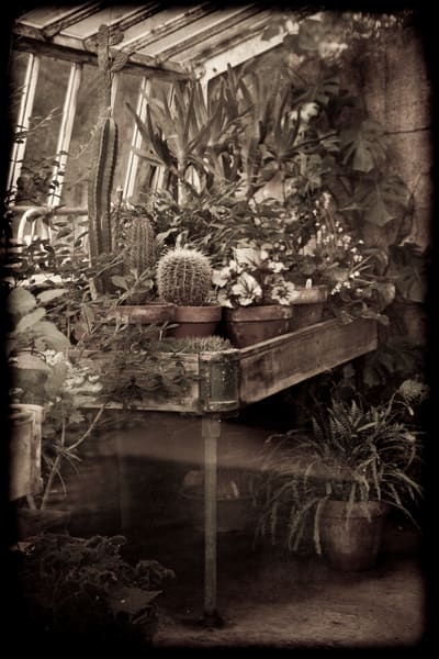 In The Greenhouse Photography Art | David Frank Photography