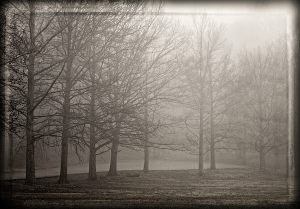 Foggy Morning Photography Art | David Frank Photography