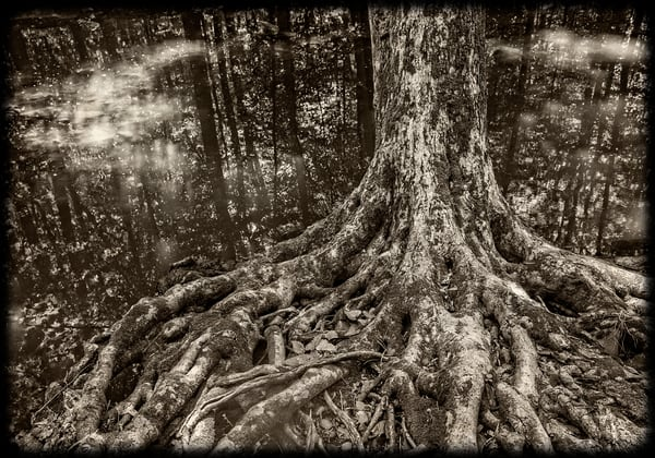 South Mountain Tree Photography Art | David Frank Photography