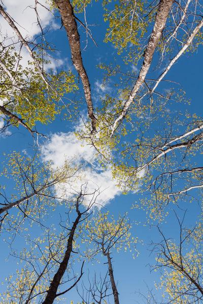 Spring Sky I,  by Jeremy Simonson