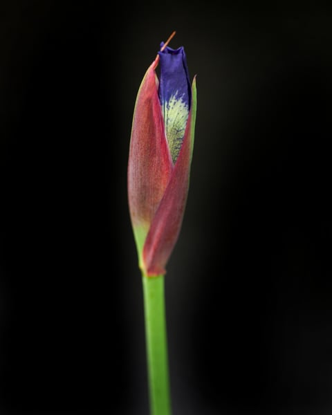Botanical 44 Photography Art   MPF Gallery