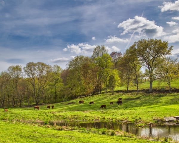 Springtime Grazing Photography Art   Will Nourse Photography