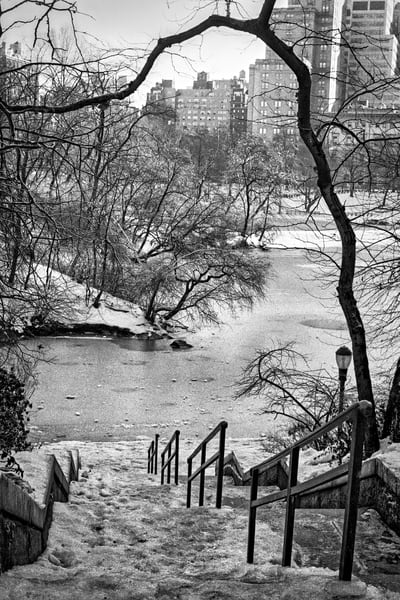 Winter In Central Park Photography Art | frednewmanphotography