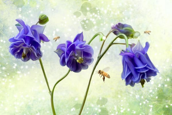 Fine Art Floral, Mixed media and Nature photography: Shop prints by An Artist's View Photography