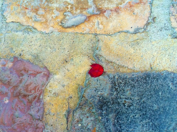 Petal On Stone Photography Art | Michael Haggiag