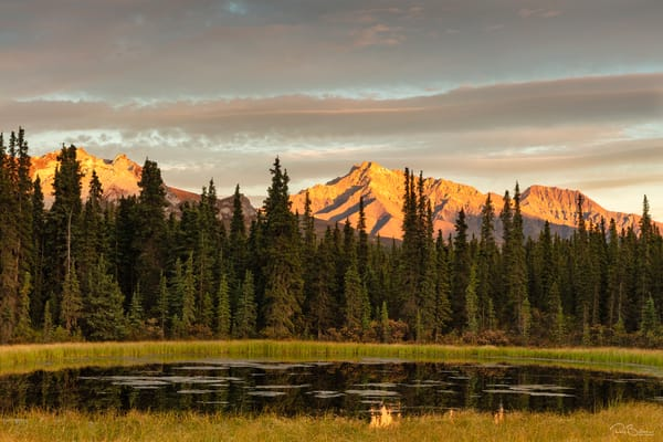 Alpenglow on Alaska Range mountains provides a backdrop to a pond near Teklanika in Denali National Park in Interior Alaska.