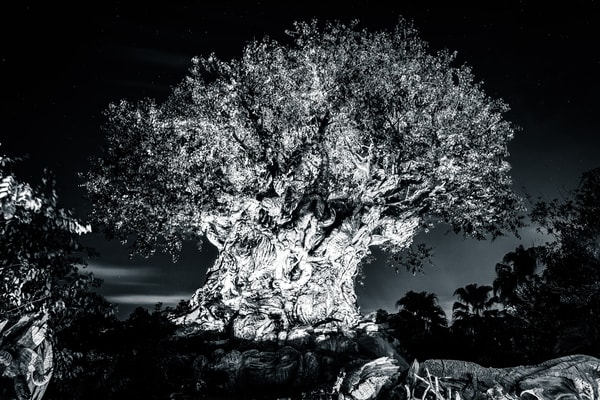 Tree Of Life Awakenings Black And White Photography Art | William Drew Photography