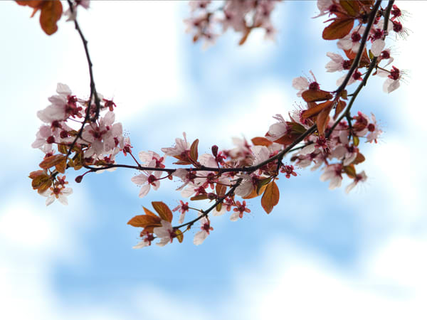Flowering Branch Against The Sky Photography Art | Eric Hatch