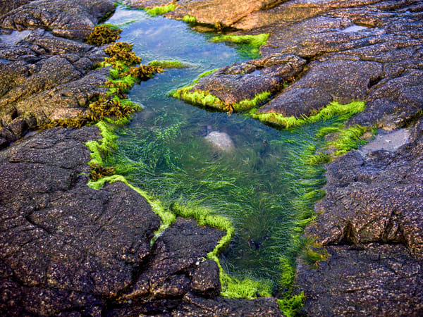 Tidal Pool, Early Morning Photography Art | Eric Hatch