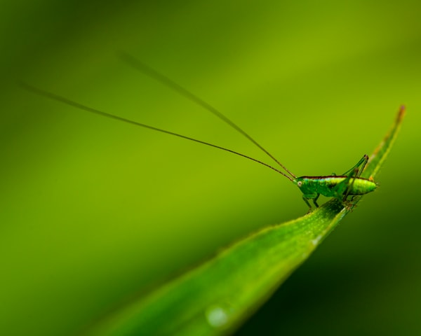 A Tiny Green Friend - Art Print - Tamea Photography