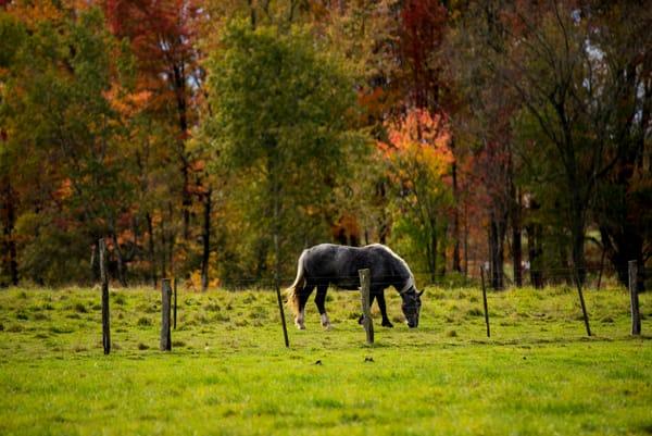 Horse Autumns Splendor