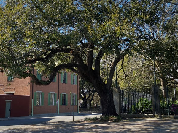 Stately Tree Art | DocSaundersPhotography