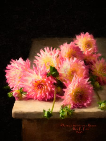 """Dahlias botanicals Gloria"" Open Edition"