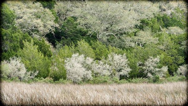 Florida Woods Photography Art | David Frank Photography
