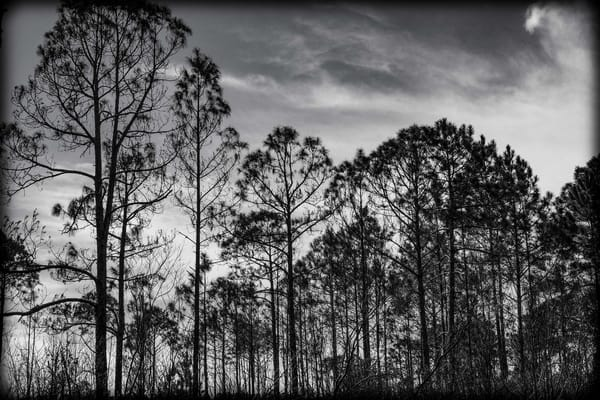 Silhouette Of Trees #1 Photography Art | David Frank Photography