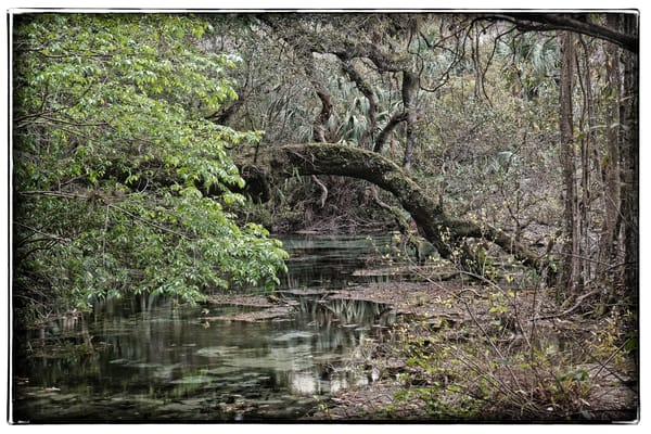 Wooden Arch Photography Art | David Frank Photography