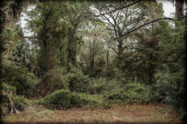Cedar Key Woods Photography Art | David Frank Photography