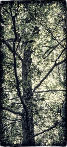 Spring Tree Photography Art | David Frank Photography