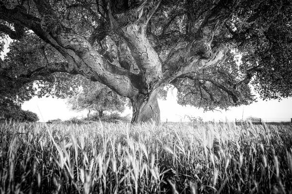 The Dragon Photography Art | Roberto Vámos Photography