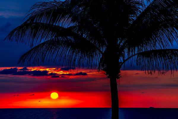 Tropical Calm