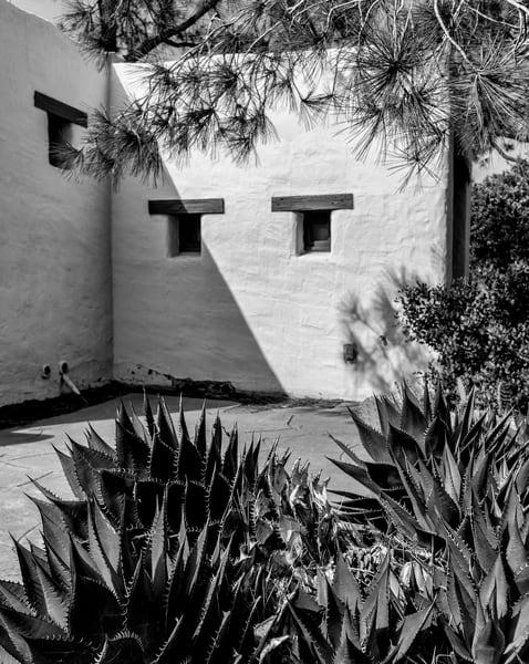 pine tree, white, windows, cactus, shadow