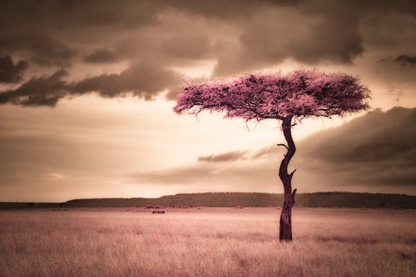 Surreal Landscape Photography Art | nancyney