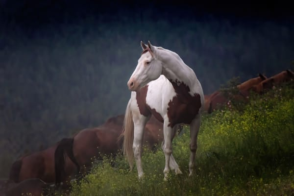 Fine Art Horse Photography | Last Light