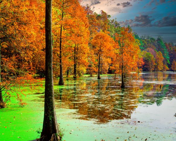Bald Cypress Autumn Art | Robert Vielee Photography