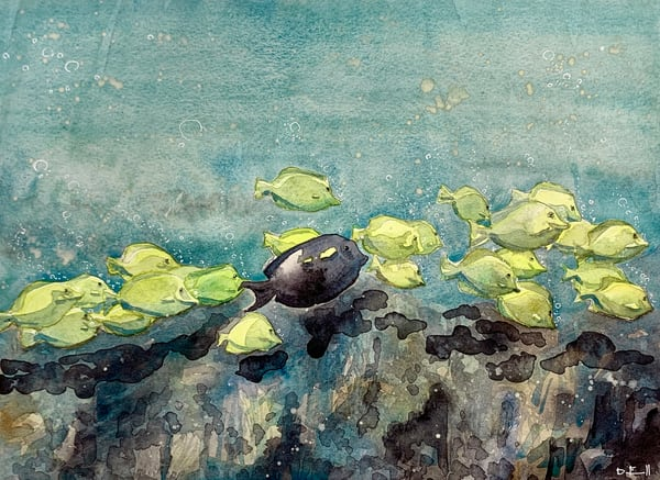 watercolor, art, maui, kapalua, yellow, tang, fish