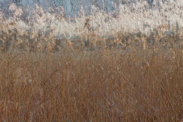 Grass Painting by Jeremy Simonson