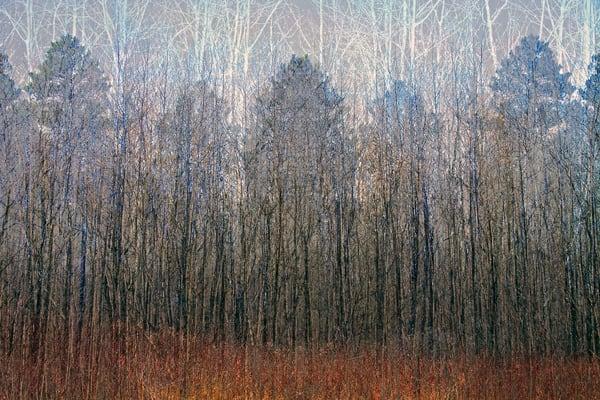 Treeline I