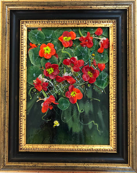 Hanging Nasturtium   Glass Panel Art | Art a la Carte Gallery (Karen Rexrode, Manager)