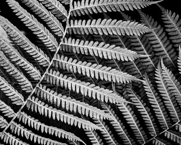 Frond Photography Art | Nicholas King Photography