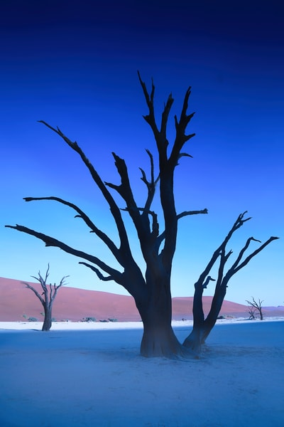 Dead Vlei Blue Tree Photography Art   nancyney
