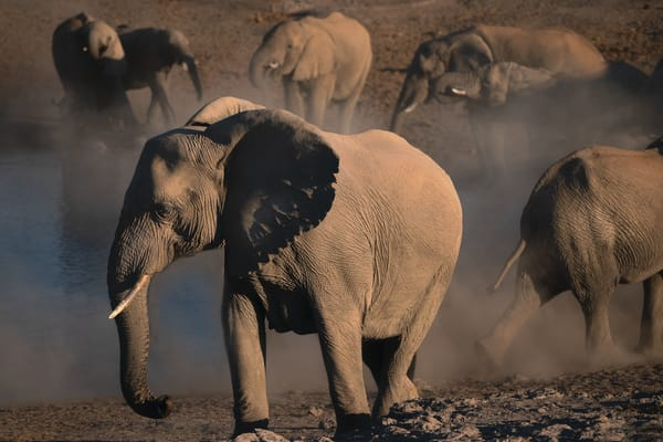 Elephants And Dust Photography Art   nancyney