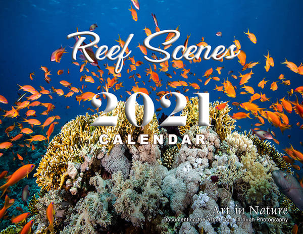 Reef Scenes 2021 is a calendar with photographs of coral reefs available for sale.