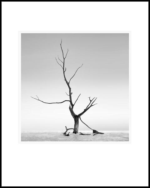 Lonely Tree Art   Roy Fraser Photographer