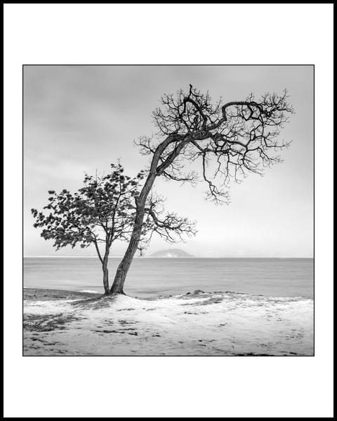Iconic Tree Art | Roy Fraser Photographer
