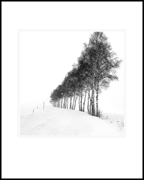 Row Of Trees Art   Roy Fraser Photographer