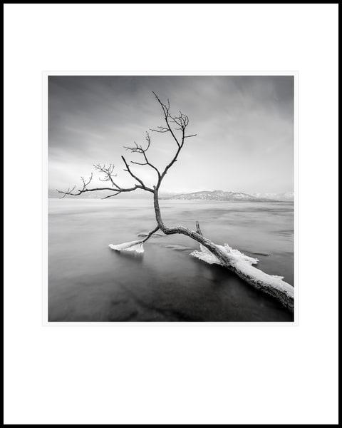 Running Branch Art   Roy Fraser Photographer