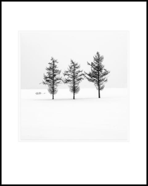 Three Trees Art   Roy Fraser Photographer