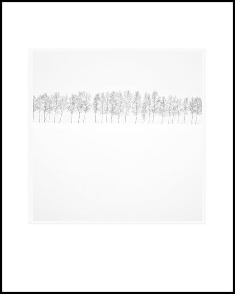 Treeline Art   Roy Fraser Photographer