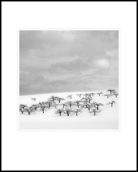 Winter Orchard Art   Roy Fraser Photographer