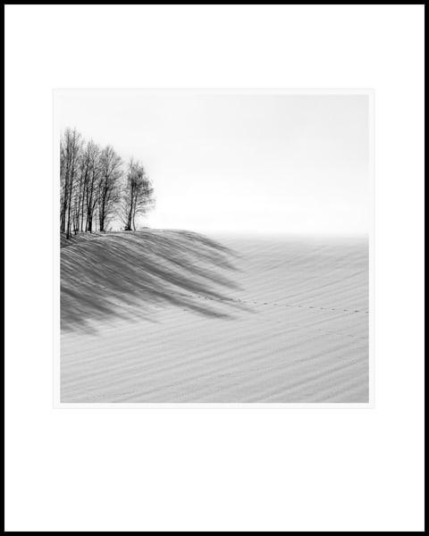 Sakhalin Fox Prints Art   Roy Fraser Photographer