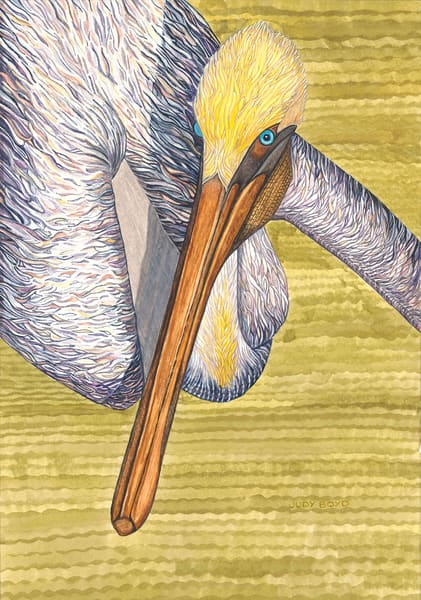 Brown Pelican Art | Birds by Boyd