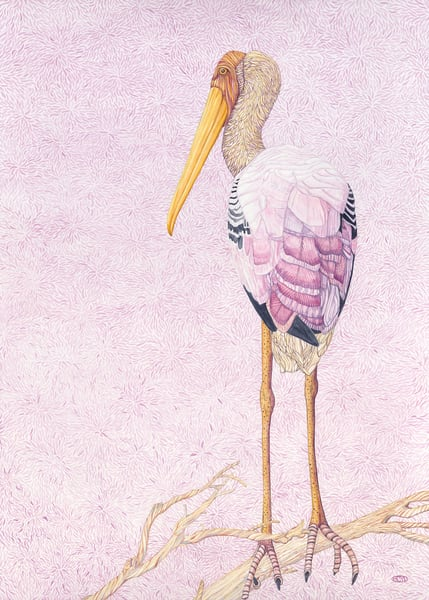 Painted Stork: Original watercolor by Judy Boyd.
