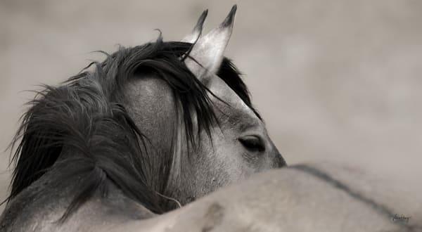 Warrior Within Photography Art   Koru Photo Designs