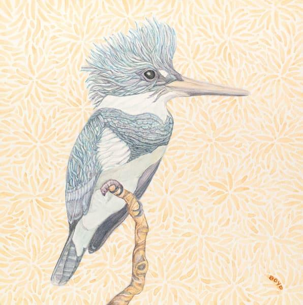 Belted Kingfisher Art | Birds by Boyd